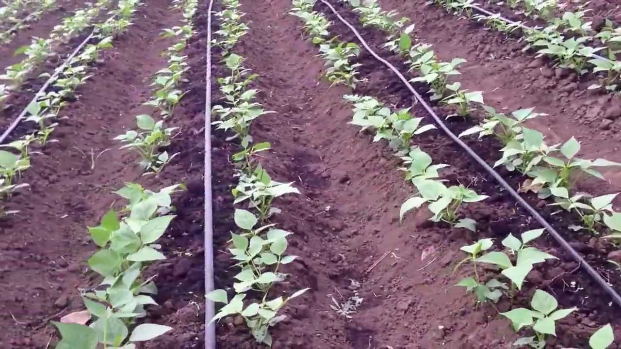 One Line Drip Irrigation Acre Kit Youtube