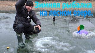Зимняя рыбалка на лесном озере Поставил жерлицы подловил плотвы и пожарил колбаски