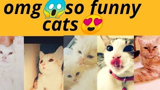 omg/Persian cats/baby cats/cute/funny/comedy/entertainment/cat lovers/pet love/The zilna amna show