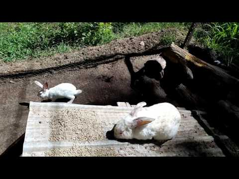 General Update (Growing Shade) - Meat Rabbit Colony (S.1-E.33)