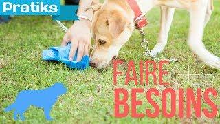 Comment apprendre à votre chien à faire ses besoins à un endroit précis