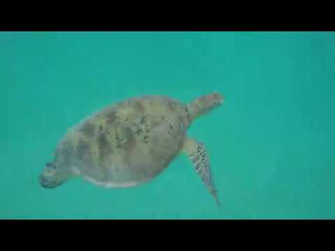 Daintree & Cape Tribulation Highlights