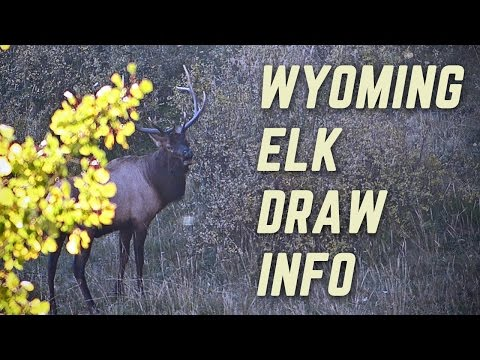 How To Apply For Elk In Wyoming