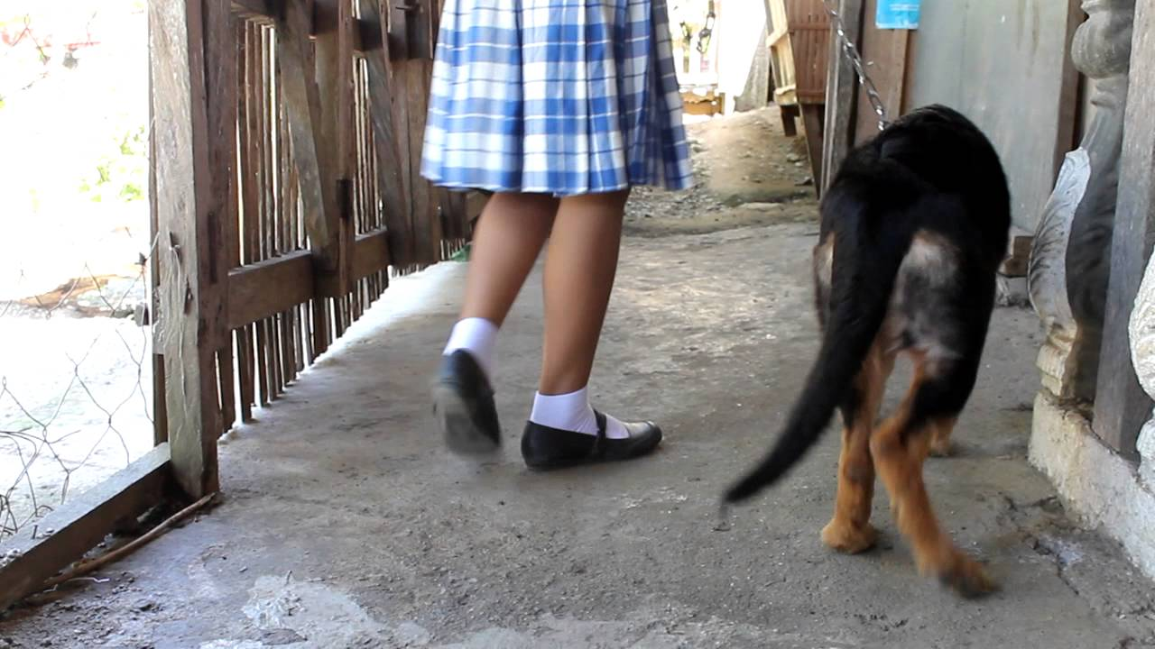 GSD     Is there a problem with my gsd's hind leg?