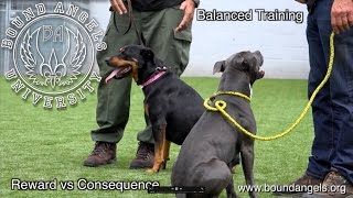 Balanced Training.  Reward vs. Consequence