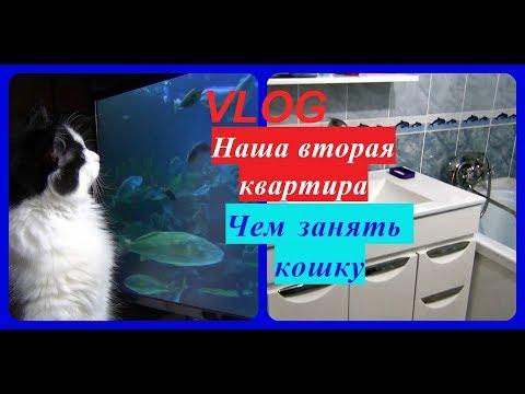 VLOG/Наша вторая квартира. Чем занять кошку.