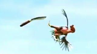 Kungfu Ayam. Seekor ayam yang sangat akrab dengan pemiliknya bercita cita menjadi pendekar. Ia dilatih langsung oleh sang pemilik. Untuk mengetahui apa ...