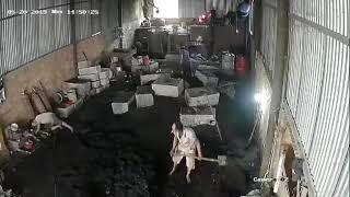 Tai Nạn Điện Giật Chết Người - Camera Quay Lại