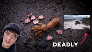 Most Parasite Infested Shrimp and Deadly Waves!