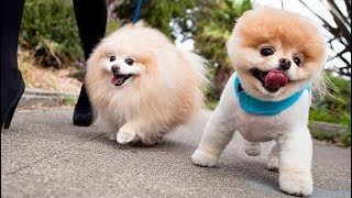 Cute Is Not Enough 😍 Funny Cats and Dogs Videos Compilation 2018 #15