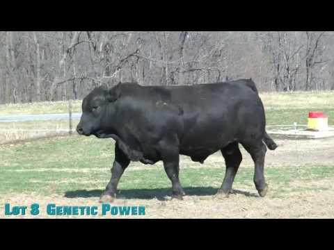 Lot 8  Genetic Power