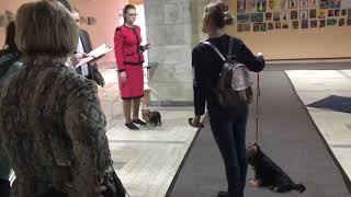 Выставка собак  САС Курск