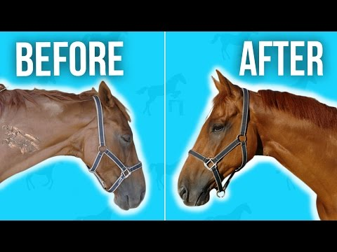 MY HORSE BATHING ROUTINE | EP 1 Horse 101 (NEW Equestrian Series)