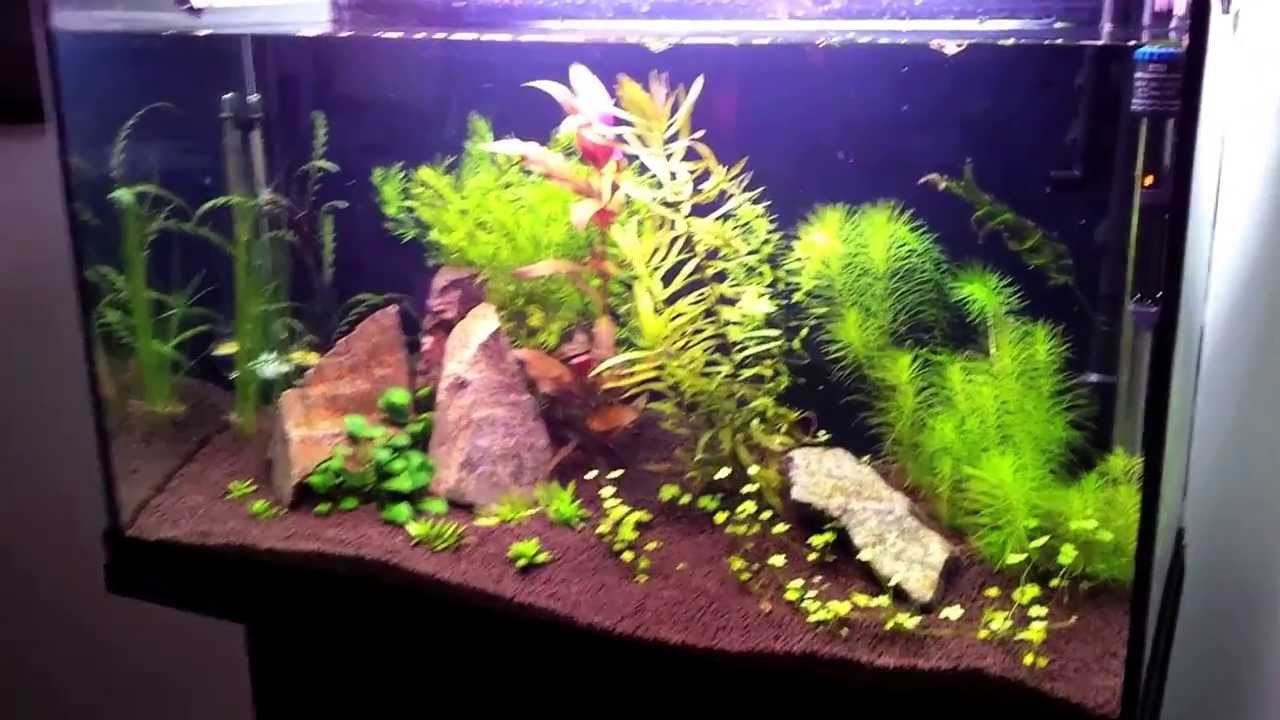 Freshwater planted aquarium 125 l youtube for Aquarium 80 litres