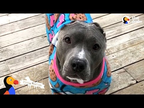 What Happens When You Adopt A Pit Bull | The Dodo Pittie Nation