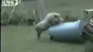 135animal sex funny video collection