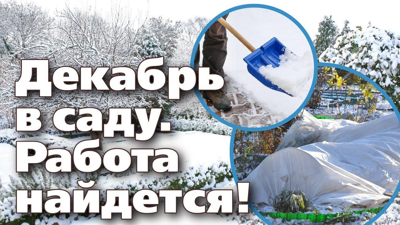 ПЛАН РАБОТ САДОВОДА В ДЕКАБРЕ