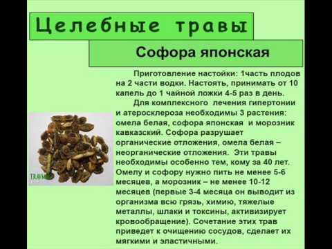 Стевия! Полезные свойства стевии. Стевия от сахарного диабета атеросклероза гипертонии.
