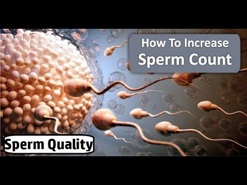 Top 10 Foods that Increase Your Sperm Count and Sperm Motility