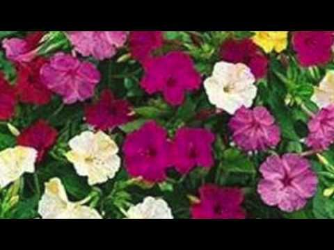 Four O'Clock Flowers speaks to Yesenia Montilla