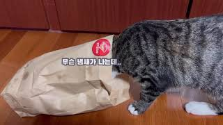 [냥냥리뷰 - 장난감편 ] 고양이 두뇌 렙업 뿜뿜 7번…
