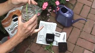 Save Annual Plants - take cuttings before frost