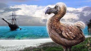 Animales Extintos: El Pájaro Dodo