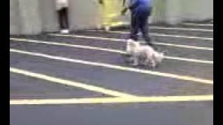 Jcm's Dog Training Basic Class, Week 5 - Starting Off Leash