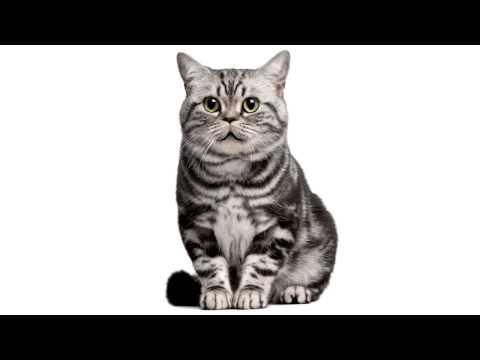 Смешные коты скачать приколы мои видео приколы