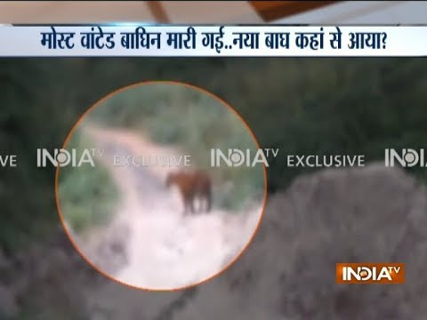 Caught on camera: Tiger spotted in Maharashtra`s Yavatmal