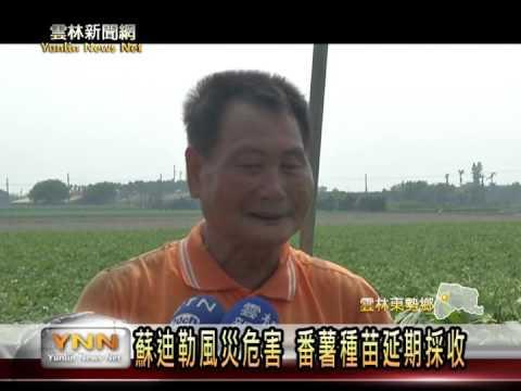 東勢番薯種苗,受蘇迪勒影響嚴重