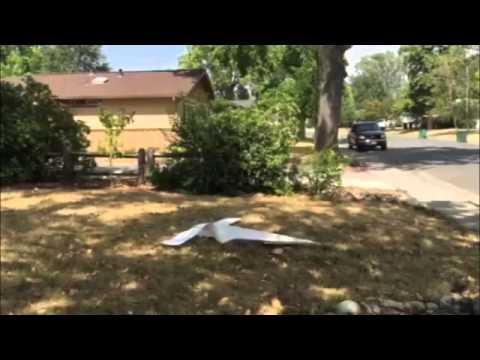 GISHWHES 2015 024 NASA Paper Airplane Kale Hydra