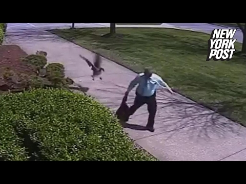 Officer viciously attacked by a goose