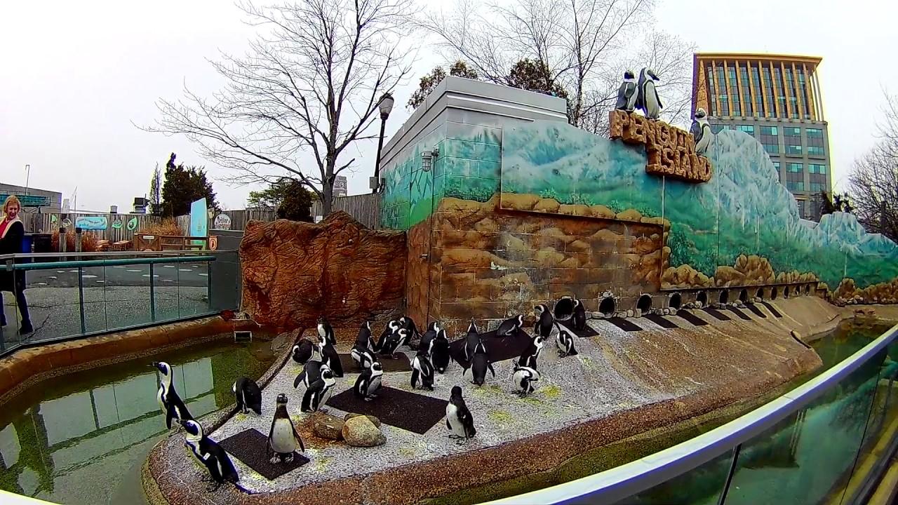 Trip to Adventure Aquarium in Camden (January, 2017) - YouTube