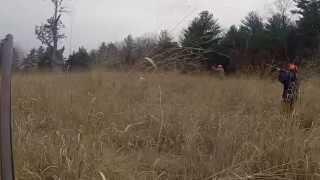 Hunting pheasant with a 410 shotgun
