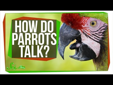 Download Youtube: How Do Parrots Talk Like Humans?
