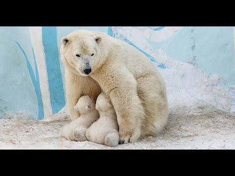 VLOG//Новосибирский зоопарк. Наша прогулка с дочей