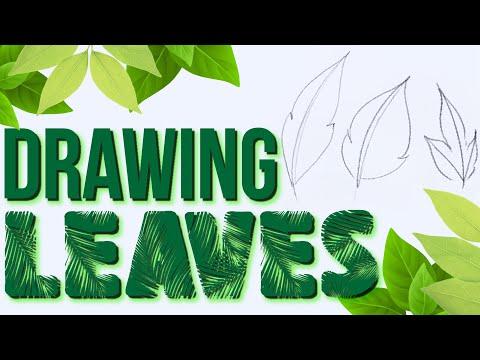 drawing-basics- -easy-way-to-draw-a-leaf
