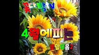 꽃말모음ㆍ4월에피는꽃2ㆍ사랑ㆍ건강ㆍ배려ㆍ행운꽃ㆍ돈꽃ㆍ꽃점