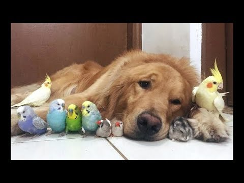 Cute Parrots Videos Compilation cute moment of the animals - Soo Cute! #1