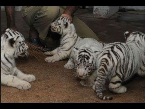 wild animal national zoology park||Delbiker Jeet