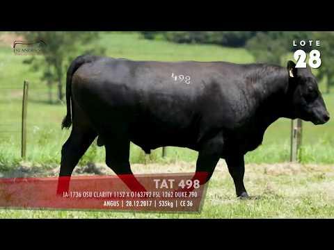LOTE 28 - TAT 498
