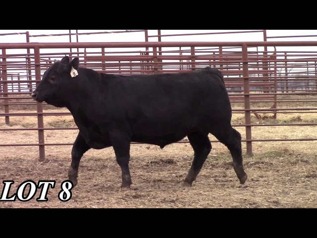 Mead Angus Farms Lot 8