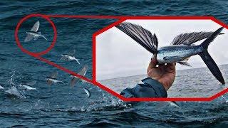 उड़ने वाली मछली सबसे हैरतअंगेज जानवर  5 Unique Animals