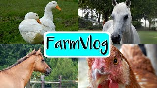 Farm Vlog | Our New Additions | 6/3/17