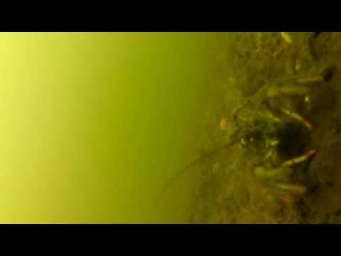 Семеновка подводный мир