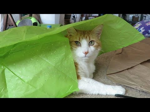 Covering My Cat In Tissue Paper