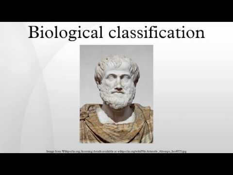 Biological classification