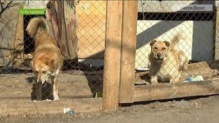 Собачий вольер в многоэтажке Усть-Абакана довел соседей до скандала