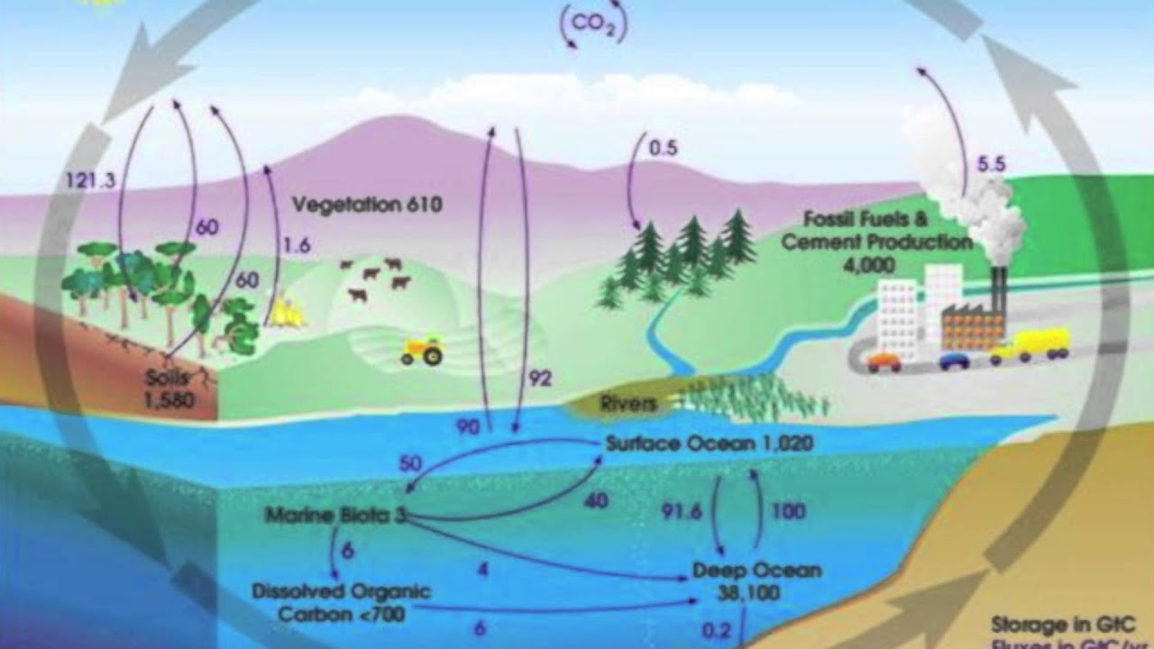 carbon cycle explanation